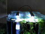 Dennerle Nano Cube 10 Liter Mit Led Beleuchtung Hd with regard to dimensions 1280 X 720
